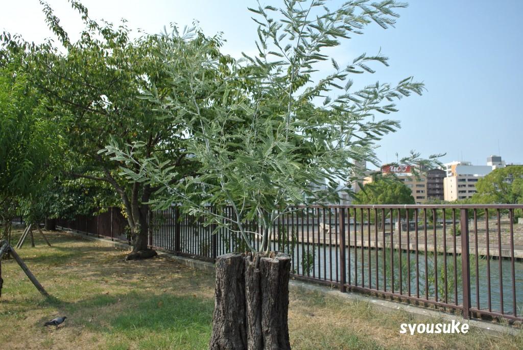 2013/08/17 大阪城公園 桃園にて NIKON 1 V1 1 NIKKOR VR 30-110mm f/3.8-5.6