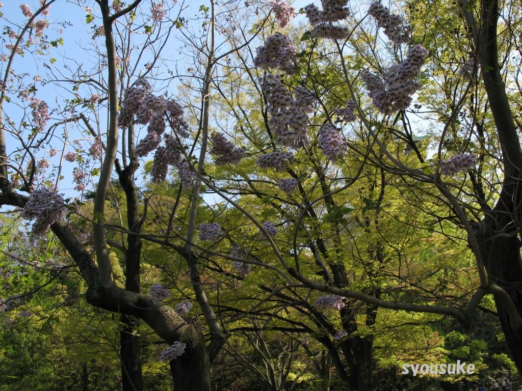 2010//05/01 刻印石広場にて Canon PowerShot G7