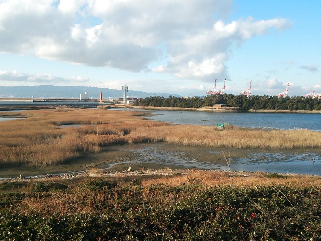 野鳥園北池